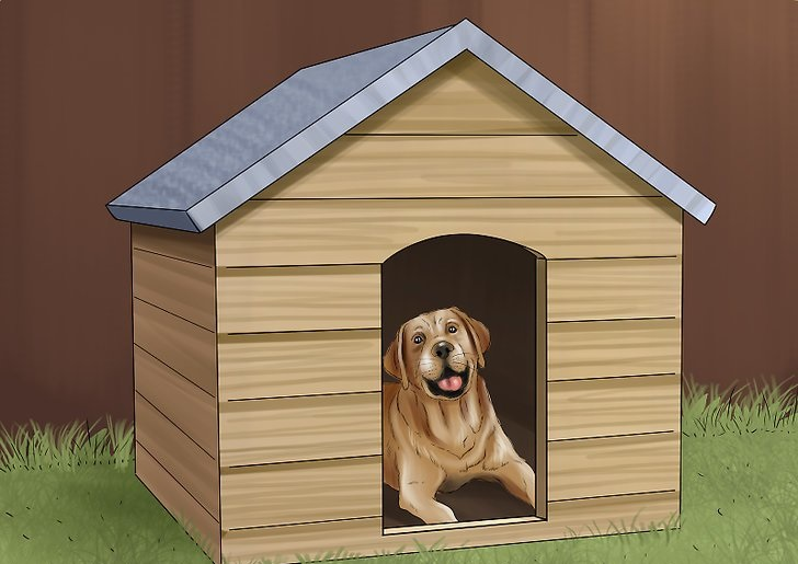 5 Things You Need To Have A Pet-Friendly House