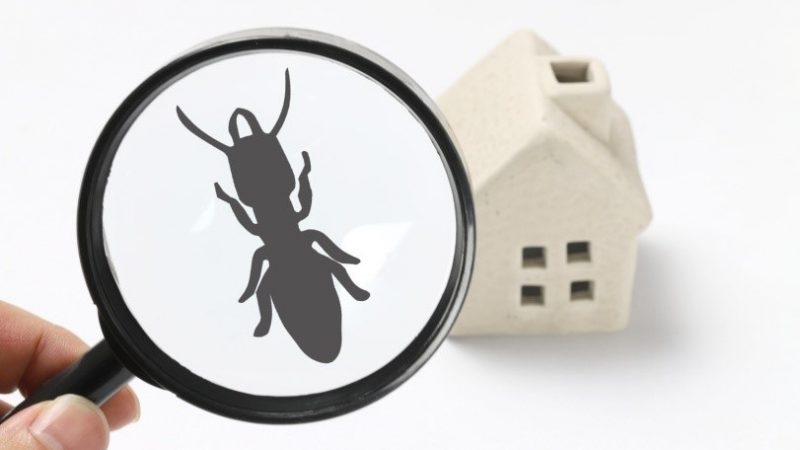Pest Control – A Simple Guide