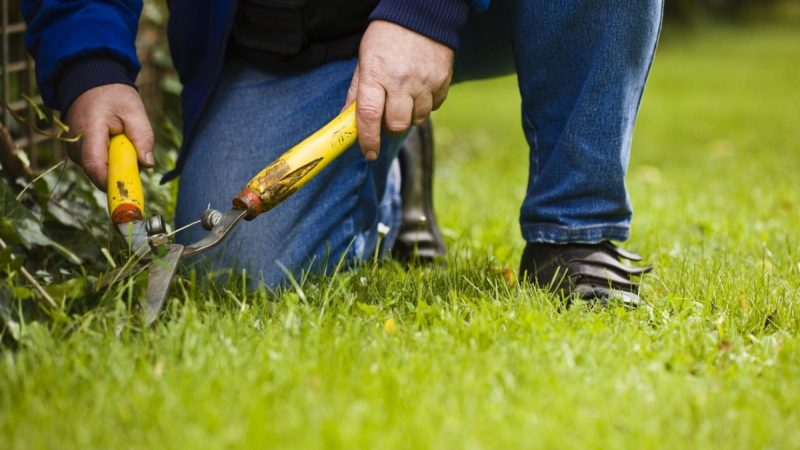 Choosing the Right Landscaping Company to Save Time and Money