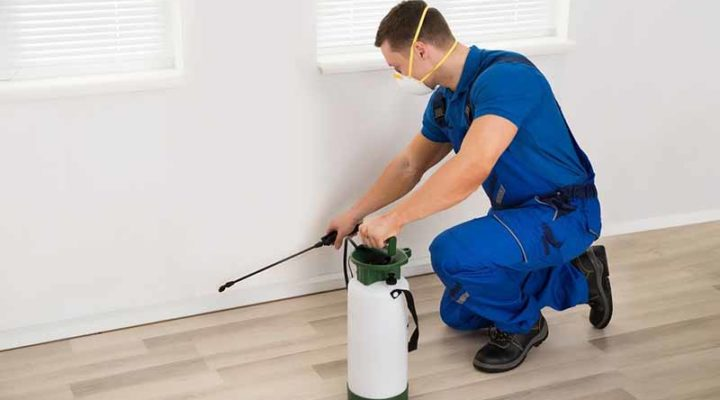 Tips To Find Pest Control Services